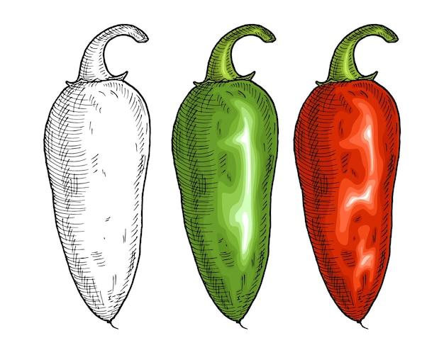 Pimenta vermelha e pimenta verde jalapeño. ilustração em vetor vintage para incubação de cores. isolado em um fundo branco. desenho desenhado à mão