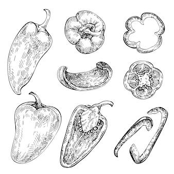 Pimentão mão desenhado conjunto. esboço de vegetais. ilustração do estilo gravado, cheio, metade e fatias. páprica, cigana, pimenta poblano.