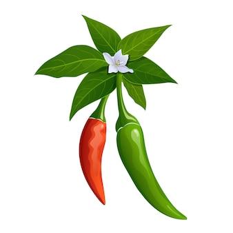 Pimentão tailandês vermelho e verde fresco com folhas de design realista isolado no fundo branco