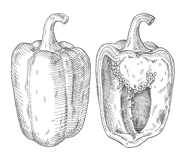 Pimentões inteiros e meio-doces. ilustração em vetor preto vintage para incubação. isolado em um fundo branco. desenho desenhado à mão