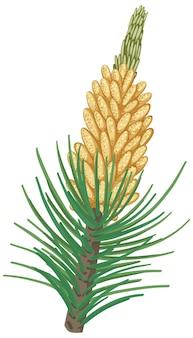 Pinecorn com agulhas de pinheiro isoladas