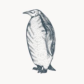 Pinguim desenhado de mão