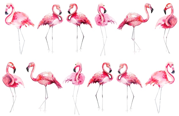 Pink flamingos pattern esboço de mão em aquarela