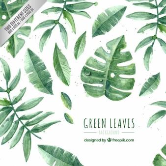 Pintados à mão folhas verdes embalar