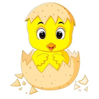 Pintinho dos desenhos animados chocado de um ovo