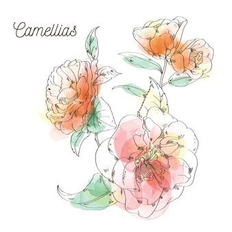 Pintura de flores de camélias em fundo branco
