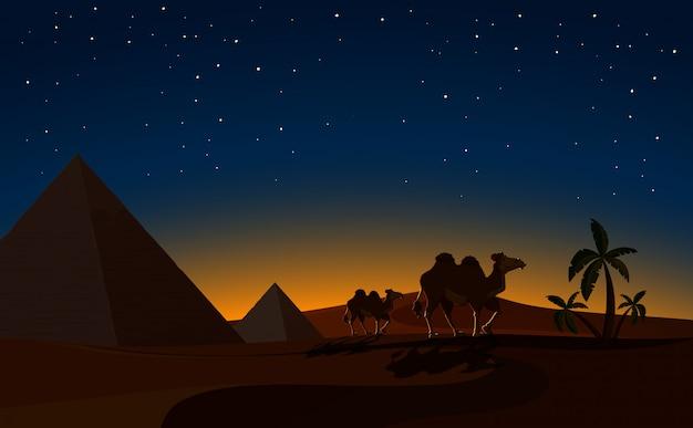 Pirâmide e camelos na cena da noite do deserto