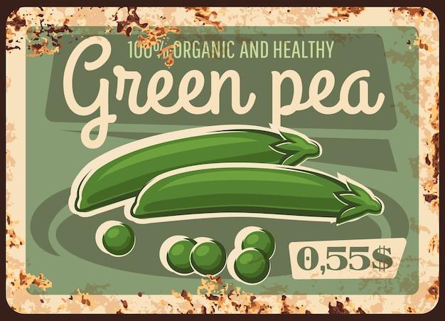 Placa de metal enferrujada de ervilha verde de fazenda. sementes e vagens de ervilha maduras, leguminosas orgânicas.