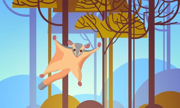 Planador de açúcar voando na floresta animal selvagem australiano fauna fauna conceito paisagem horizontal