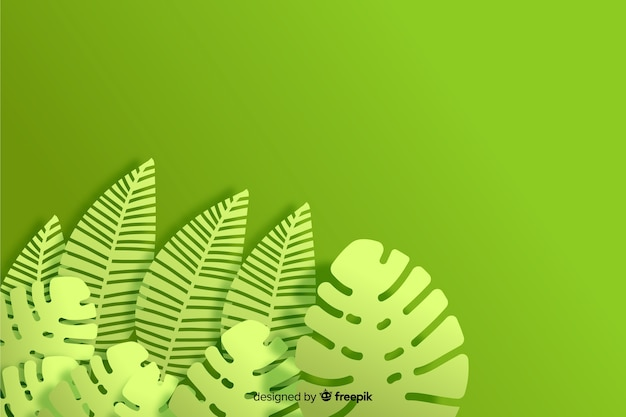 Plano de fundo monocromático monstera planta
