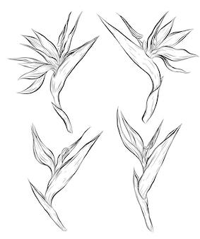 Planta ave do paraíso