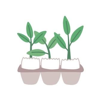 Planta brotos em ilustração vetorial plana de casca de ovo. vegetação, raminhos de planta de casa. jardinagem, horticultura, melhoramento de plantas. pequenos brotos de ervas na bandeja de ovos, isolada no fundo branco.