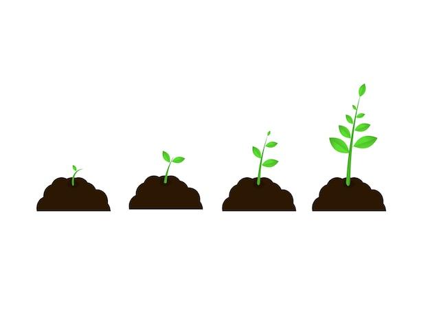 Planta crescer estágios vector sementes crescimento velocidade passos