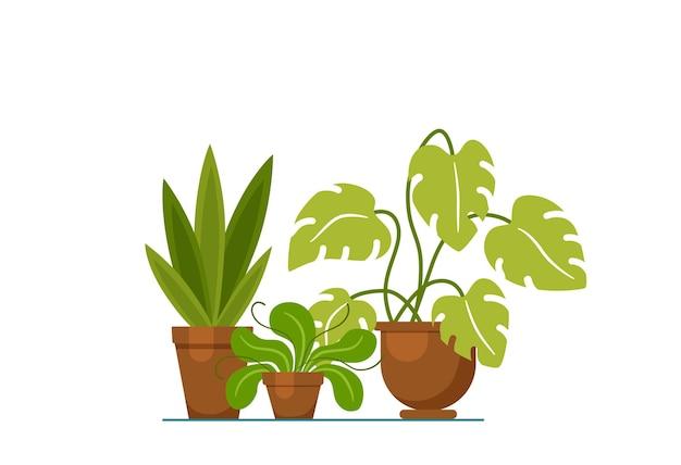 Planta da casa isolada. ilustração em vetor planta plana casa. conceito de vaso de planta plana em casa. planta de casa colorida em vaso para seu projeto. ícone de planta doméstica