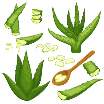 Planta de aloe vera, corte de folhas e gel em colher