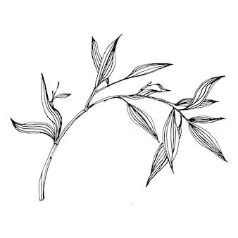 Planta de bambu com a mão desenhando o esboço.