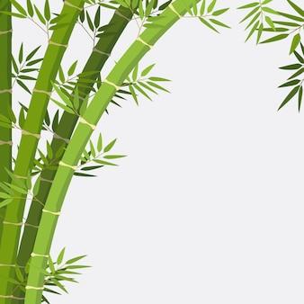 Planta de bambu no fundo branco