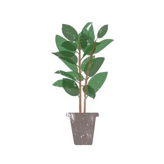 Planta de borracha em ilustração vetorial plana de pote de cerâmica. ficus, planta de casa perene em vaso da moda isolada no fundo branco. flor de interior, vegetação decorativa doméstica. elemento de design de bucha de borracha.