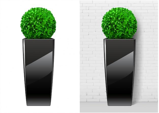 Planta de bush em panela preta moderna