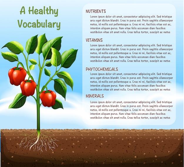 Planta de capsicum e texto