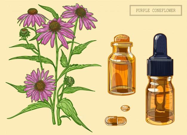 Planta de echinacea e dois frascos