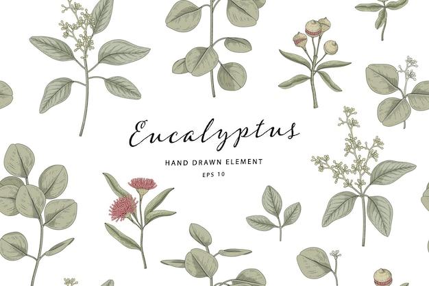 Planta de eucalipto sem costura, ilustração botânica desenhada à mão