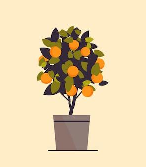 Planta de laranja em vaso crescendo árvore frutífera em ilustração vetorial de maconha