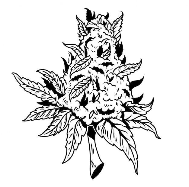 Planta de maconha cannabis verde vintage maconha
