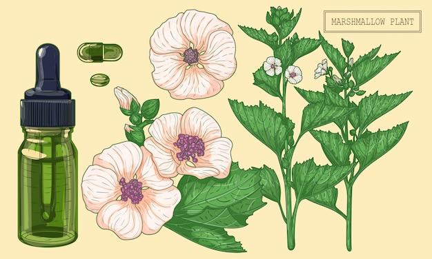 Planta de marshmallow e conta-gotas de vidro verde, ilustração botânica desenhada à mão em um estilo moderno e moderno