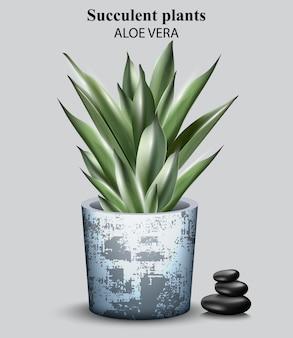 Planta detalhada de aloe vera