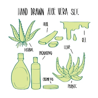 Planta e elementos de aloe vera desenhados a mão, vetor de ilustração para infográficos ou outros usos.