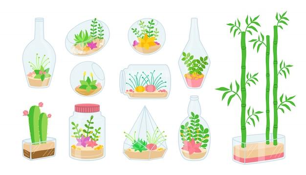 Planta e suculentas em conjunto plana de aquário de vidro. flor interior de casa de desenho animado. plantas decorativas, cactos, bambu