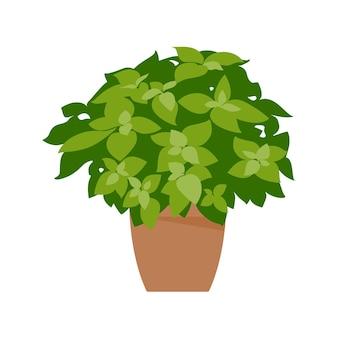Planta em casa. planta em vaso isolada no branco. plano. ilustração vetorial.