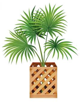 Planta em vaso com solo isolado