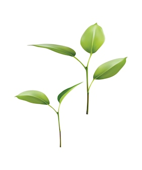 Planta folha verde crescer. ilustração