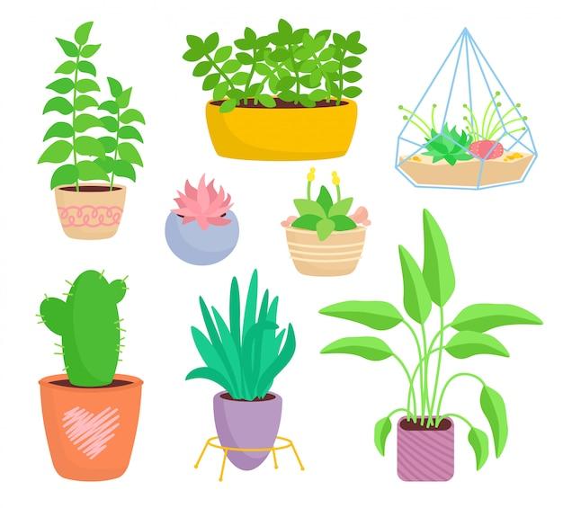 Planta interna da casa, conjunto de vasos de cerâmica plana dos desenhos animados. suculentas e plantas da casa, coleção de cactos, monstera, aloe. crescendo brotos verdes