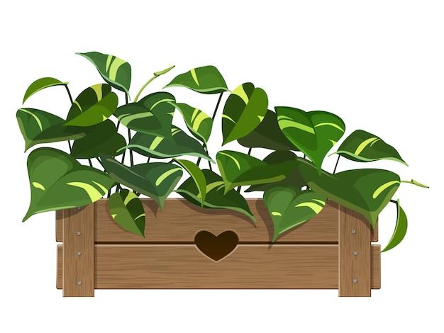 Planta interna em uma panela