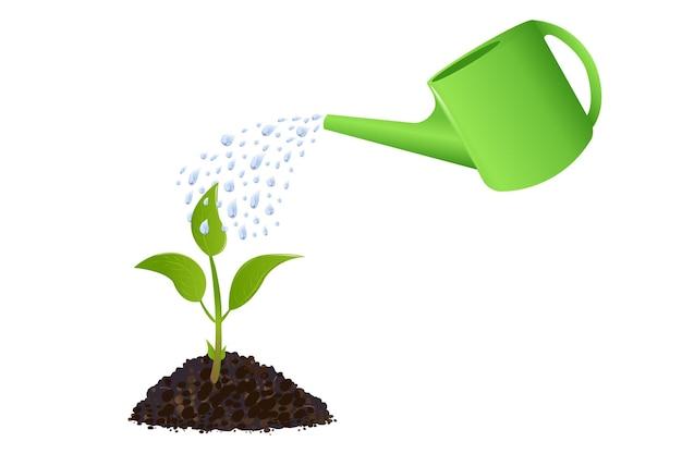 Planta jovem com regador e gotas de água, isolado no branco