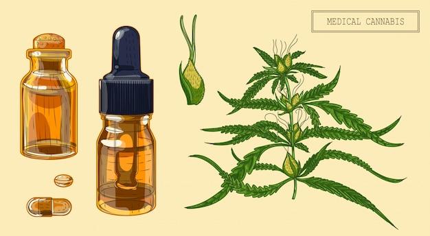 Planta medicinal de cannabis e dois frascos