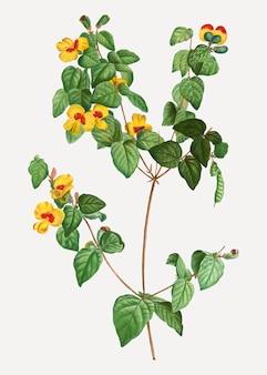 Planta plana de ervilha