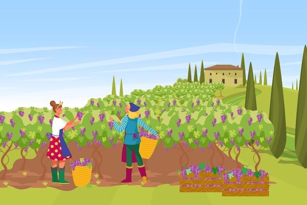 Plantação de produção de vinho na província francesa, fazendeiro colhendo uvas