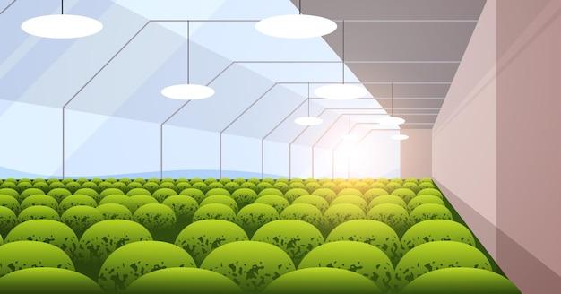 Plantação industrial plantas de cultivo agricultura inteligente agronegócio