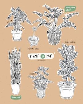 Plantar em vasos, mão desenhar desenho vetorial.