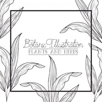 Plantas botânicas e ervas moldura quadrada