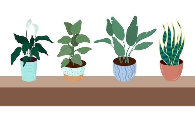 Plantas caseiras em vasos, ilustração vetorial de plantas caseiras em um estilo simples