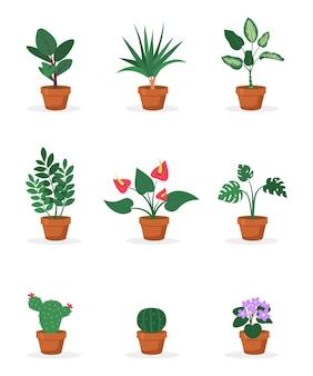 Plantas caseiras em vasos