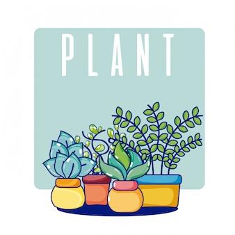 Plantas da casa do cacto