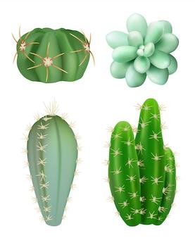 Plantas de cactos. decorativas suculentas realistas verdes botânicas indoor plantas plantas diferentes formas fotos