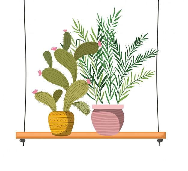 Plantas de casa com vasos na prateleira