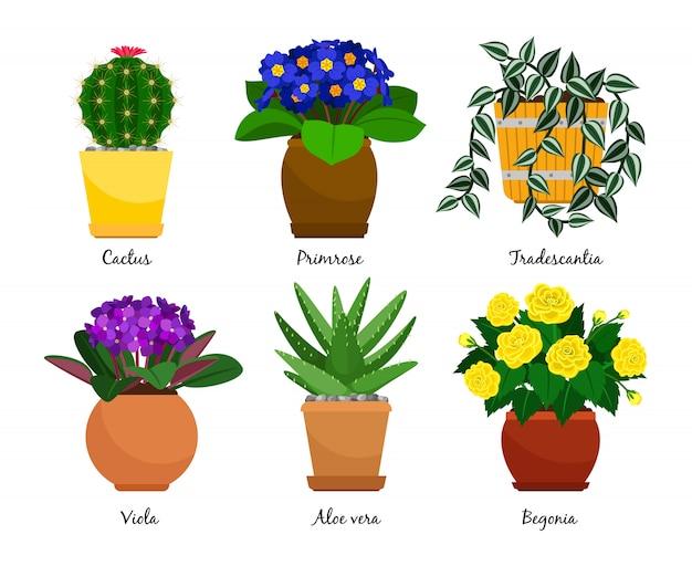 Plantas de casa e vasos de flores